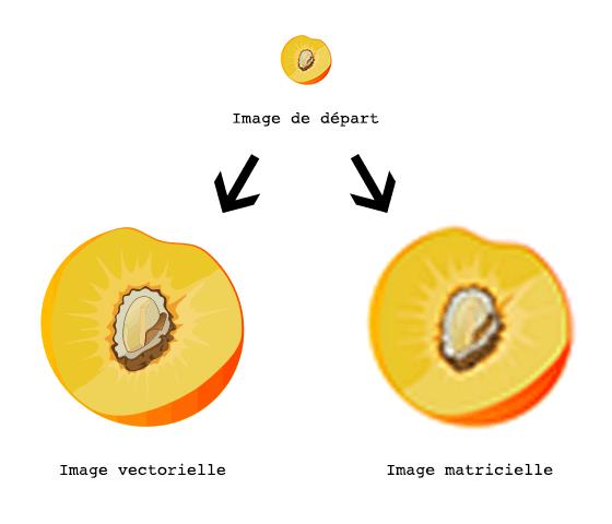vecteur vs matricielle
